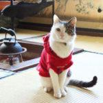 猫宿は草津温泉の中村屋旅館で看板猫が人気!沸騰ワード10に登場